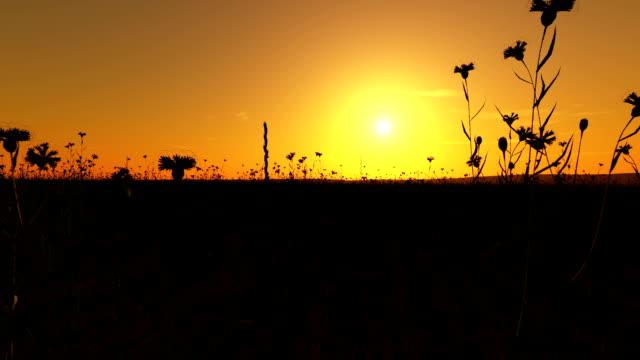 Sunset on the Cornfield video