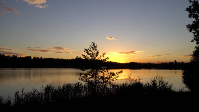 sunset on the forest lake video