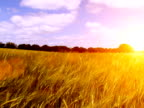 Sunset over agricultural farm fields video