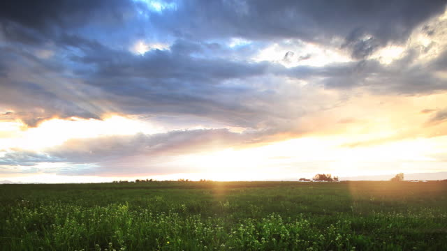 Sunset over barley field in Montana video
