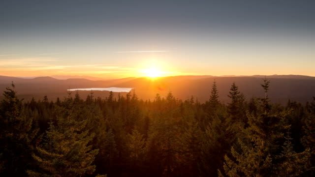 Sunset over Evergreen Trees video