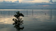 Sunset over sea with mangrove tree video