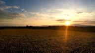 Sunset over sunflower field video