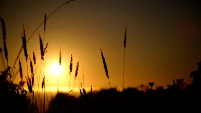 Sunset over water with grass video
