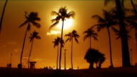 Sunset Palms video