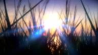 sunset sea grass video