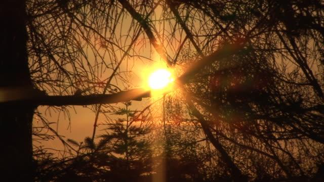 Sunset shining through the Trees - HD & PAL video