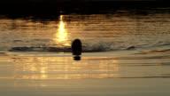 sunset swimmer video