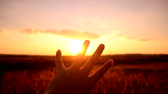 Sunset through paleets of a hand video