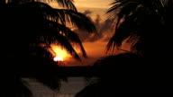 Sunset through palm tree leaf video