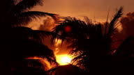 Sunset through palm tree leaves video