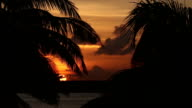 Sunset through palm tree video