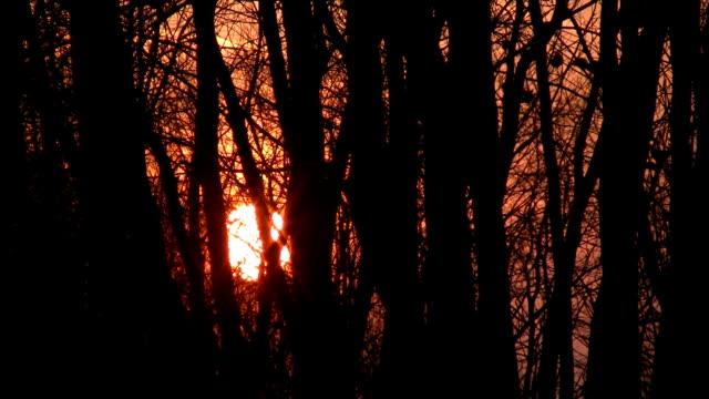 Sunset through windy trees. video