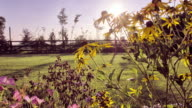 SLIDER; Sunset timelapse through garden flowers video
