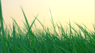 Sunset time-lapse through grass video