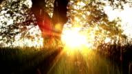 Sunset Under A Shady Tree video