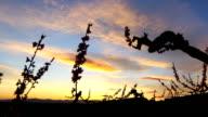 Sunset views in Penedés video