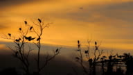 Sunset with Birds and Airplane. video