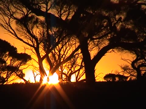 Sunset with silhouettes video
