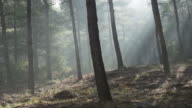 Sunshine in Foggy Forest in Turkey video