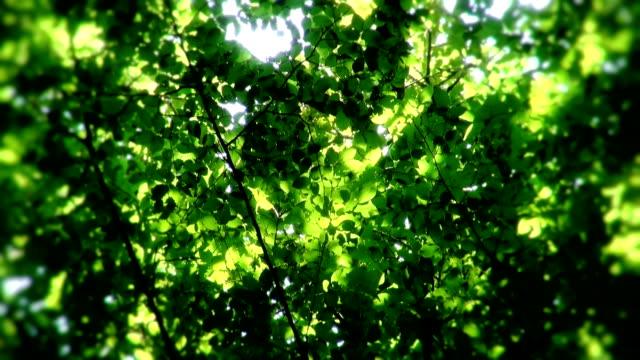 Sunshine through leaves video