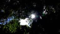Sunshine through leaves,Slow motion video