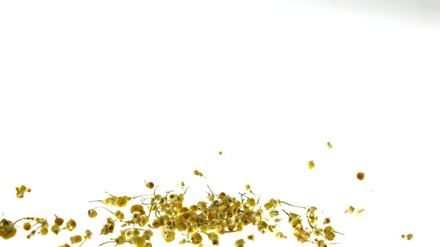 Super Slow Motion Chamomile Tea Falling on White Background video