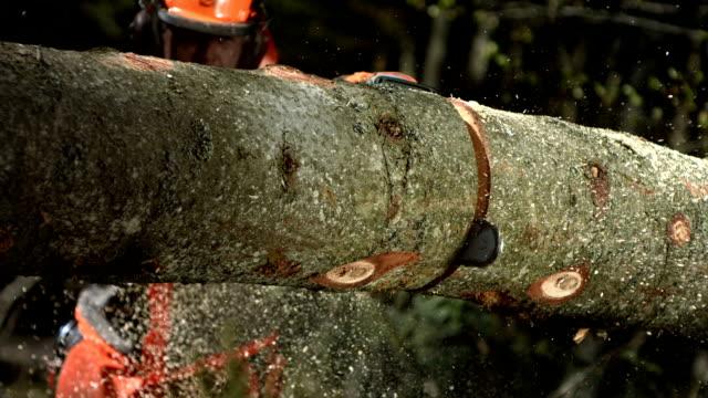 HD Super Slow-Mo: Bucking Felled Tree video