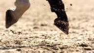 HD Super Slow-Mo: Horse Hooves Kicking Sand In Enclosure video