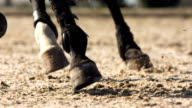 HD Super Slow-Mo: Horse Hooves Kicking Sand video