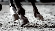 HD Super Slow-Mo: Horse Kicking Sand While Running video