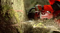HD Super Slow-Mo: Logger Cutting A Humbolt Notch video