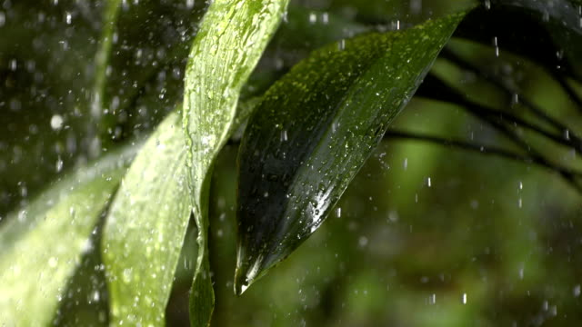 HD Super Slow-Mo: Raining On Green Leaves video