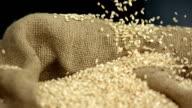 HD Super Slow-Mo: Wheat Grains Falling On Sack video