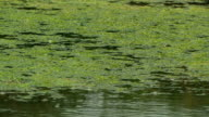 Surface of a marshy pond. HD video