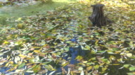 Surface of Autumn Lake. video