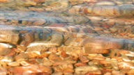 Surface sea water and stony bottom. video