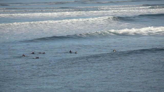 HD surfers in water video