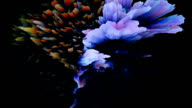 Surreal exotic multicolored flowing liquid looping background video