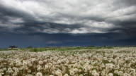 surreal stratus clouds over dandelion field in spring video