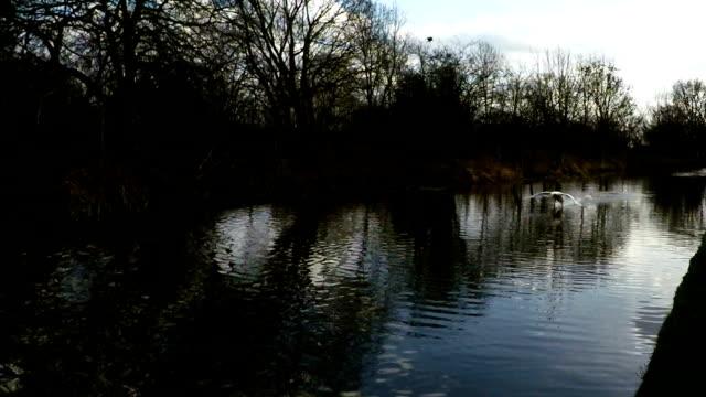 Swan Landing video