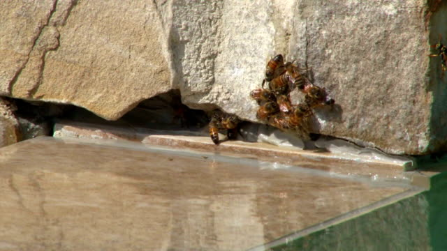 Swarm of busy bees video