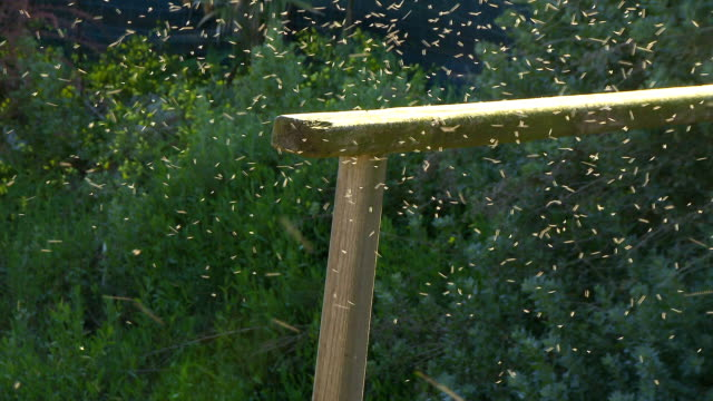 Swarm of mosquito in forest video