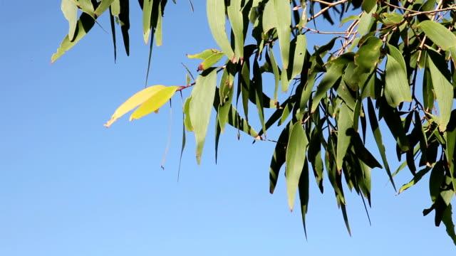 Swaying Leaves Birds Singing video