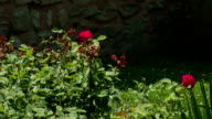 swaying trees and red rose petals video