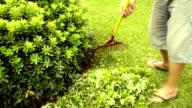sweeping leaves video