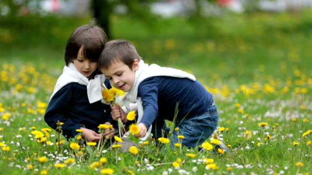 Sweet children, boys, gathering dandelions and daisy flowers in a spring field video