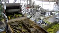 Sweet corn in a food industry video