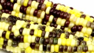Sweet Corn video