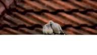 sweet couple bird video